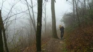cropped-Platform-photo-walk-in-woods-1-2.jpg