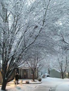 winter photo blog website